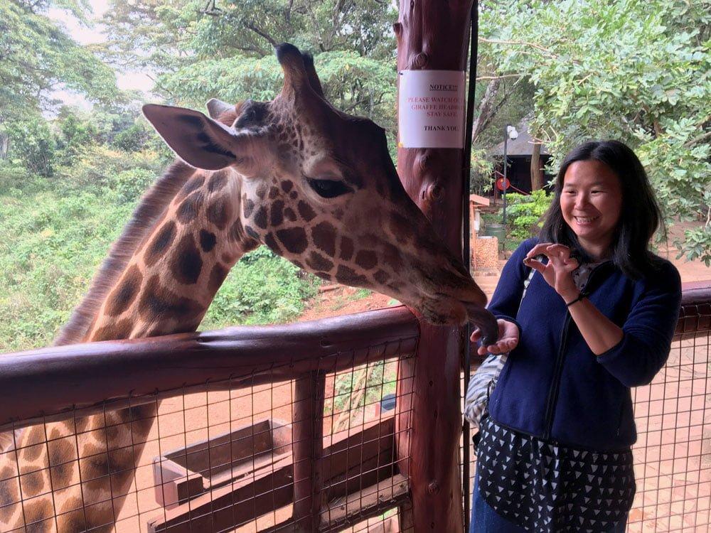 Kenya Nairobi Giraffe Centre Feeding Me