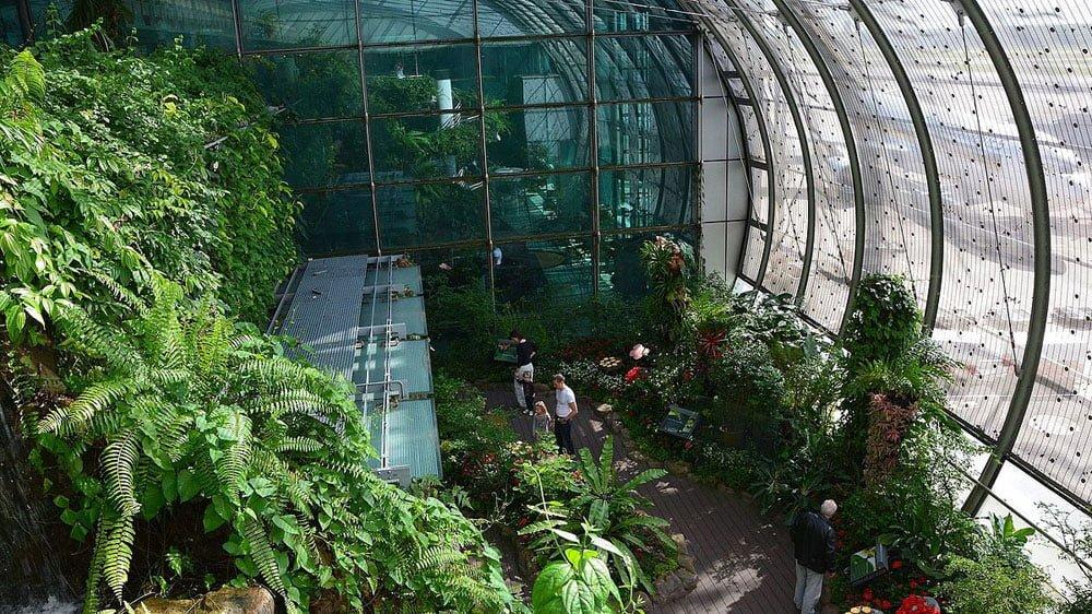 Singapore Changi Airport Butterfly Garden RajuKasambe