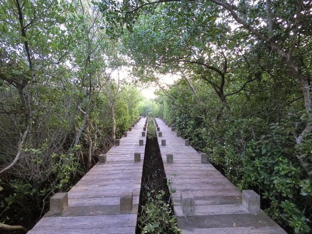 Tainan Vanaheim Mangrove Boardwalk