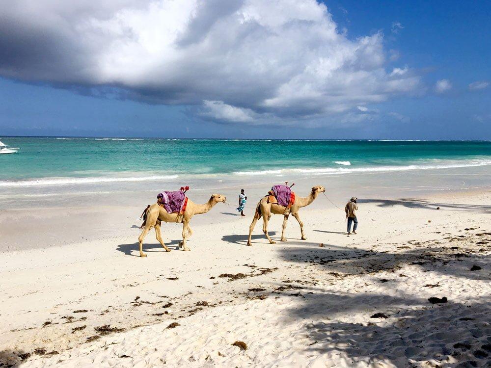 Kenya Diani Beach Camels