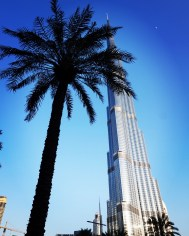 The Burj and the palm tree