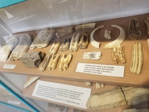 fossils at geronimo springs museum truth or consequences, nm