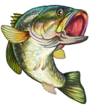 17-Jumping-Bass-Game-Fish-clipart