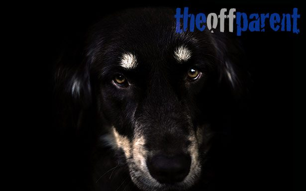 OFF-blackdog2