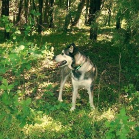Koda in the woods