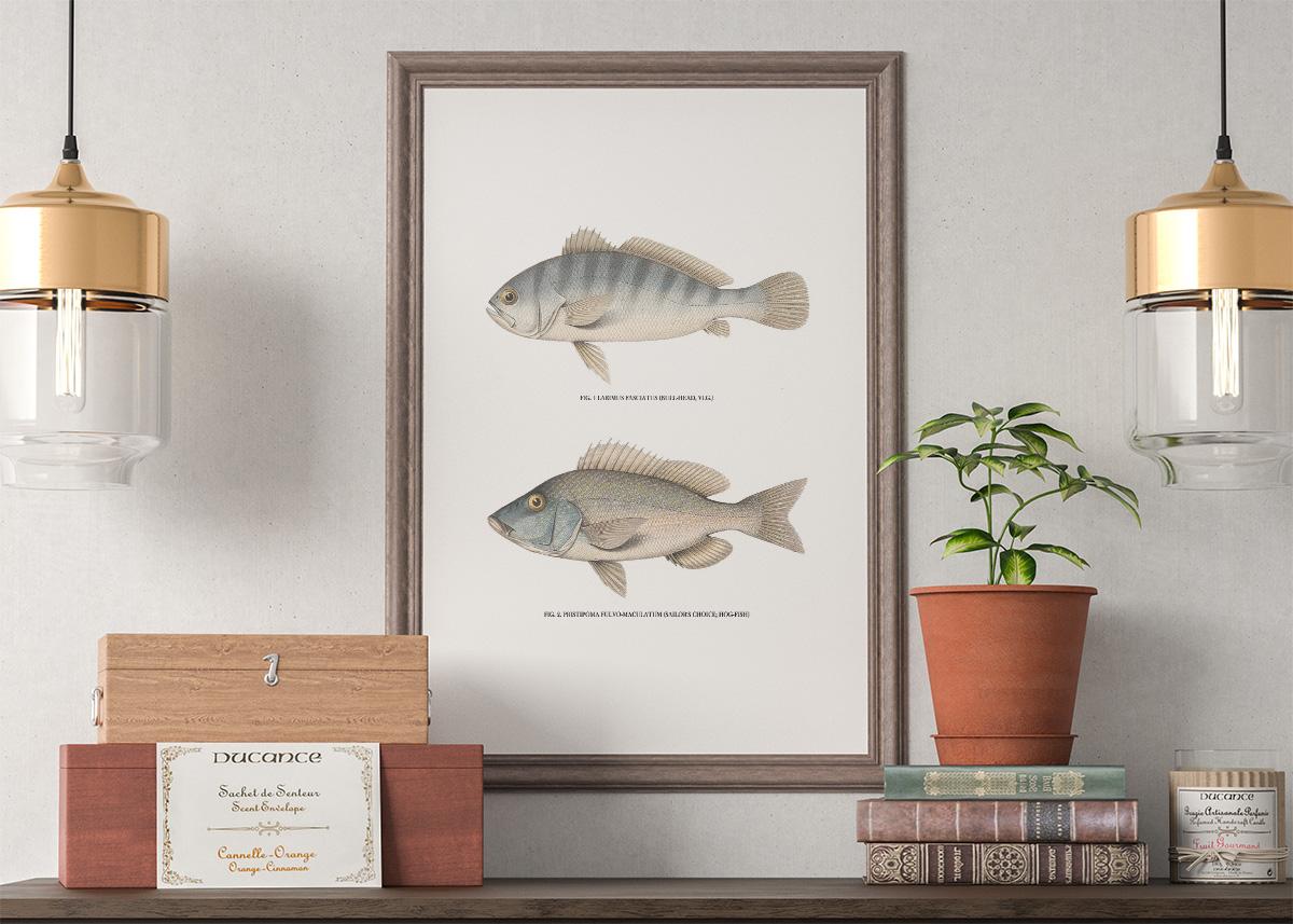 Vintage Fish Wall Art - Set of 4