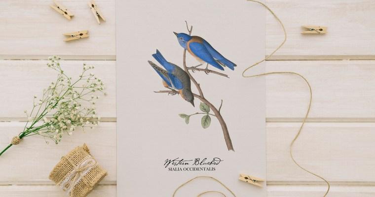 Vintage Birds Wall Art – Set of 4