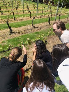 A tour of the vineyards.