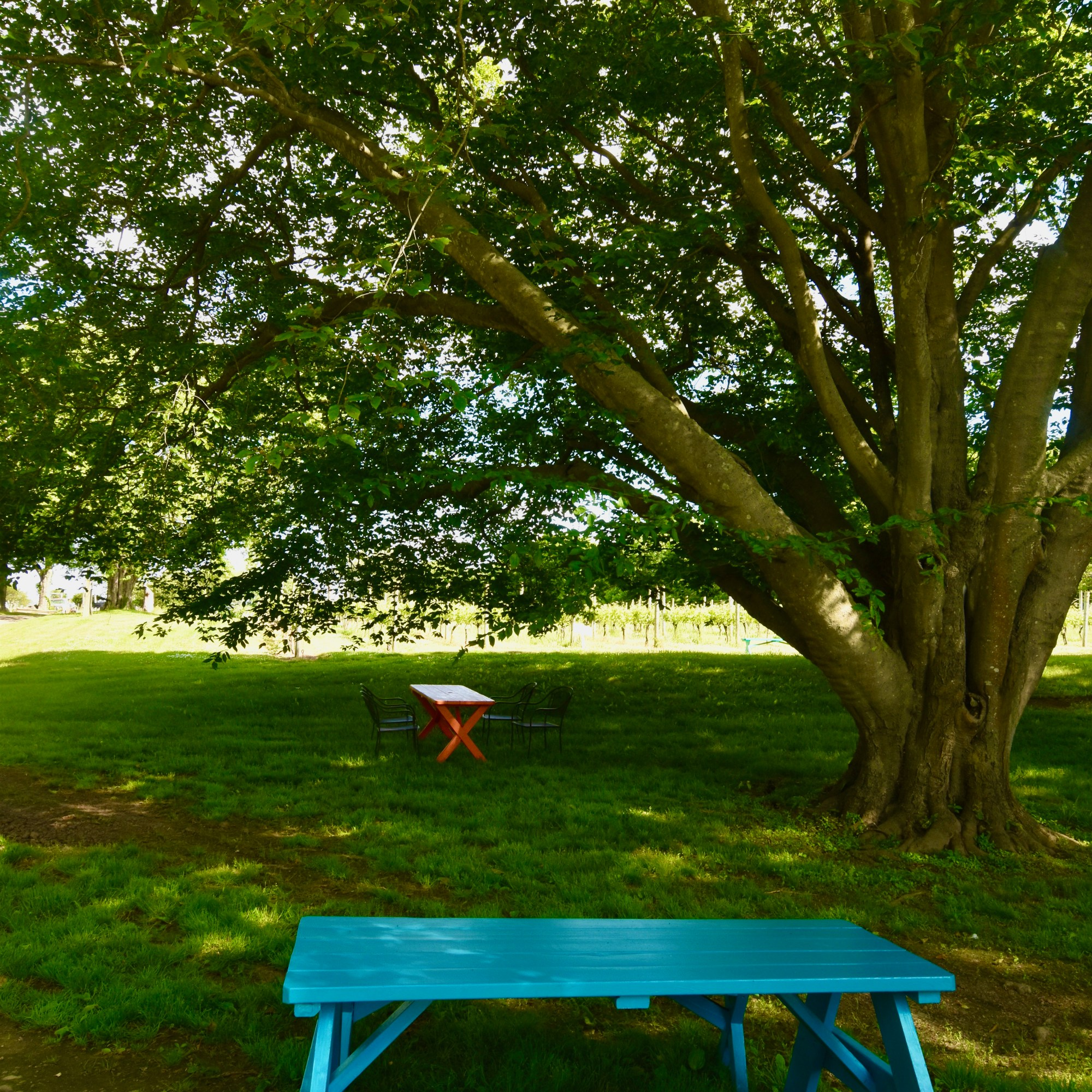picnic tables in shade under trees