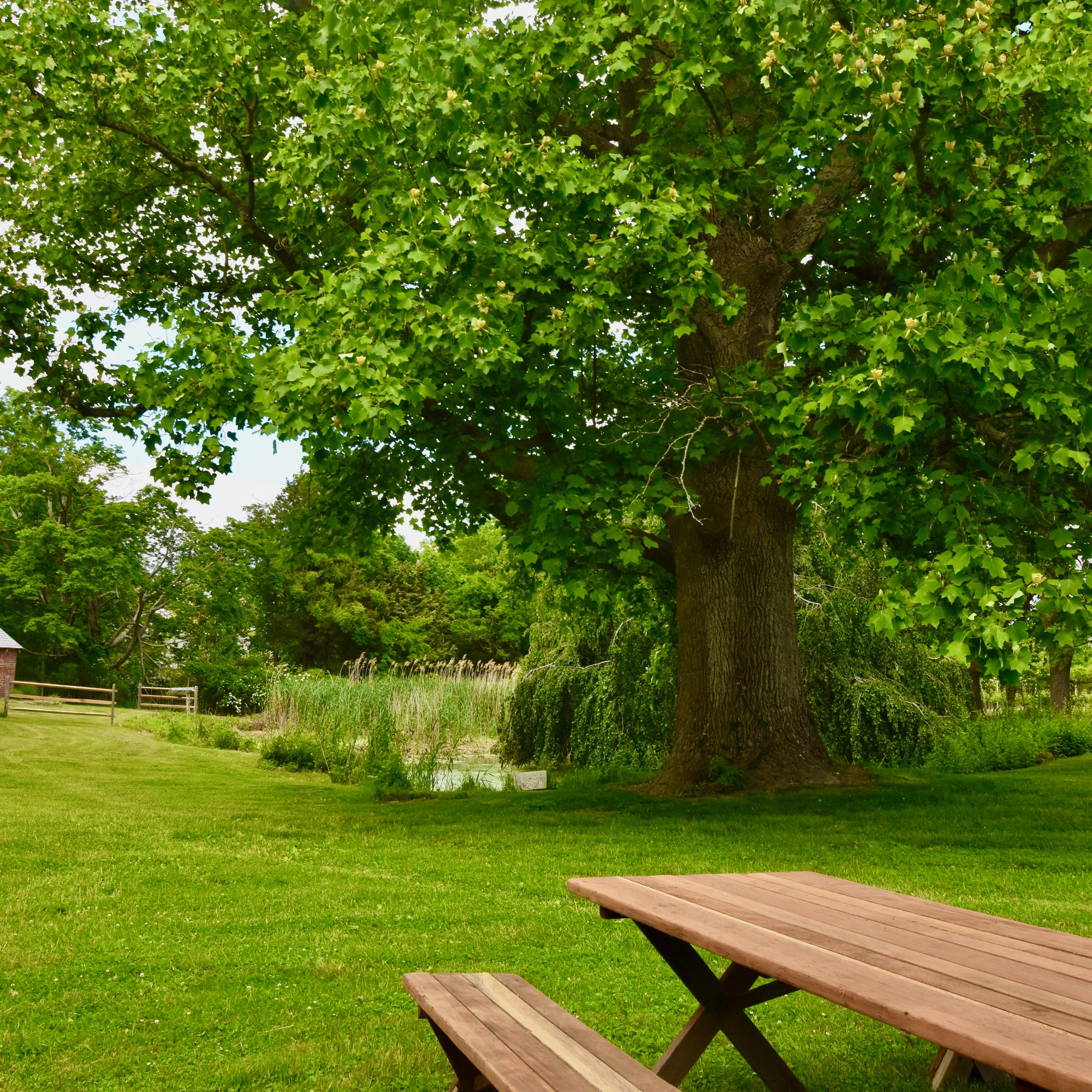 Picnic Table by pond