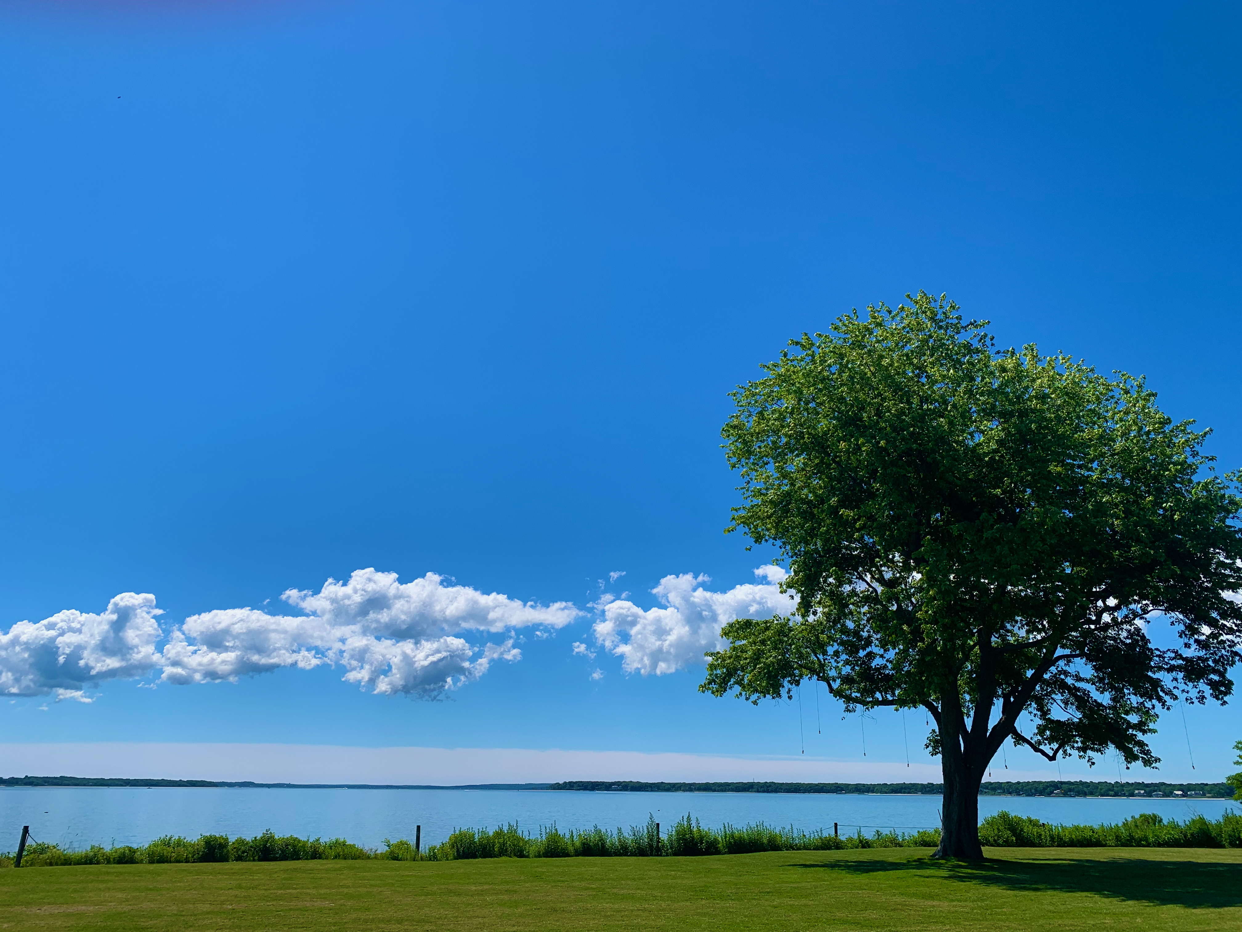 Our front lawn overlooking the bay.
