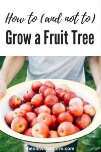 How to grow a fruit tree