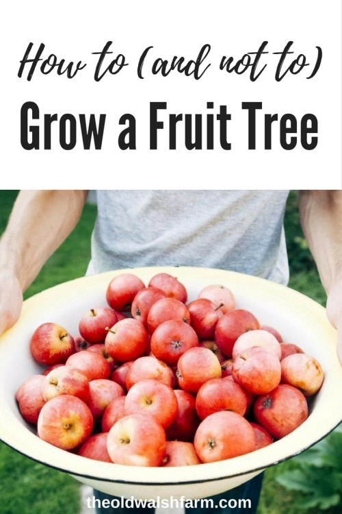 How to grow a fruit tree