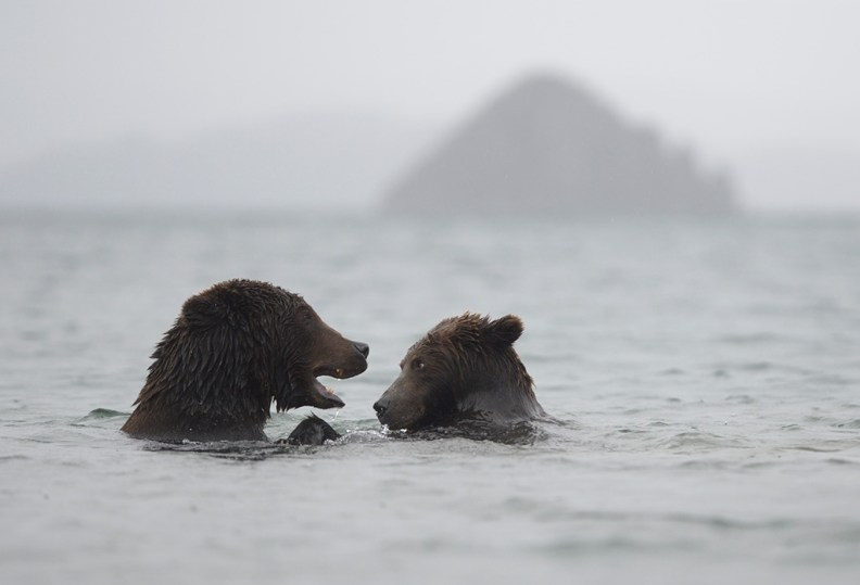 Russian Bears, Brother And Sister