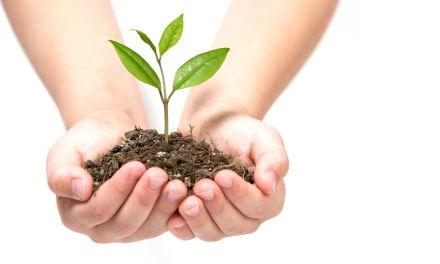 撒種的奧秘 The Mystery of Sowing