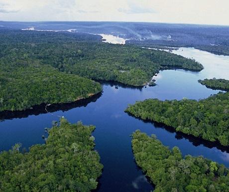 Amazon-Jungle