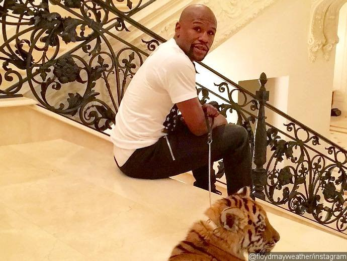 Floyd Mayweather and tiger