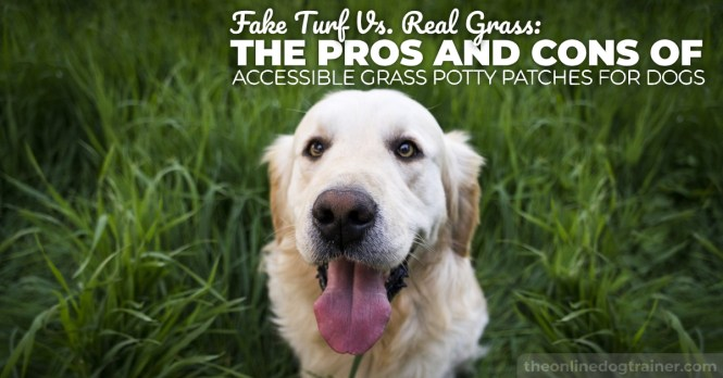 Grass Potty Patches For Dogs
