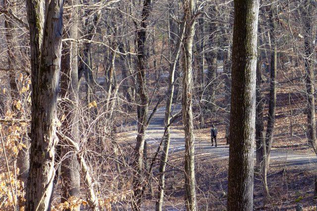 Solo hiker in NYS Rockefeller Preserve.