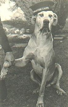 just-nuisance-great-dane