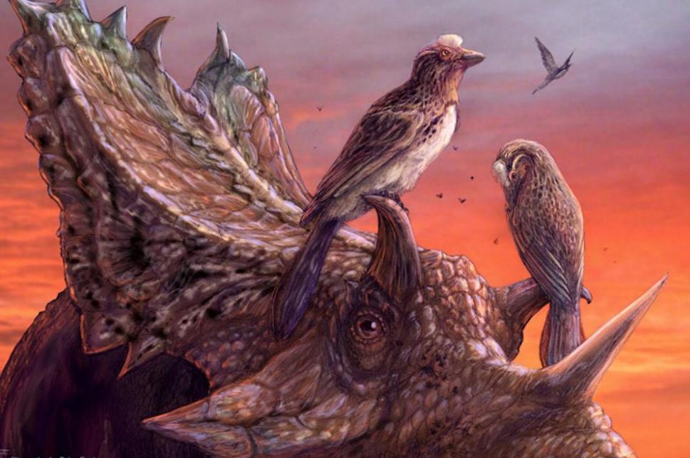 Near-complete-fossil-reveals-evolution-of-advanced-flight-among-early-birds