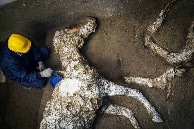 Harnessed horse unearthed in ancient stable- AP
