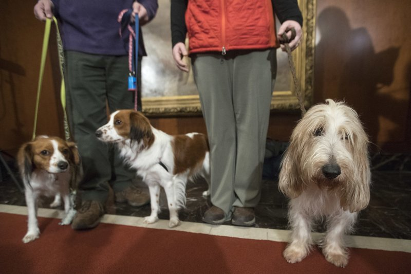 Click to copyhttps://apnews.com/8ef27d68024344b7914ad0b650cf4d63 RELATED TOPICS Entertainment North America Lifestyle Dog shows Westminster Kennel Club Dog Show Pets TV Dogs Kooiker-huh? An intro to Westminster dog show's new breeds