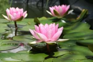 098-Psychologie positive, amour, empathie compassion