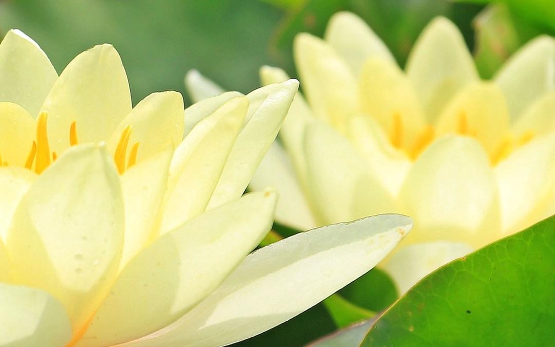 Théo devient formateur, partie 7, position spirituelle et lecture de condition