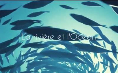La rivière et l'Océan (clip)