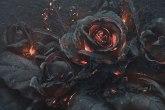 roseash2