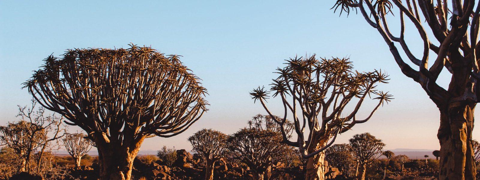 Deze natuurfenomenen in Namibië mag je niet missen