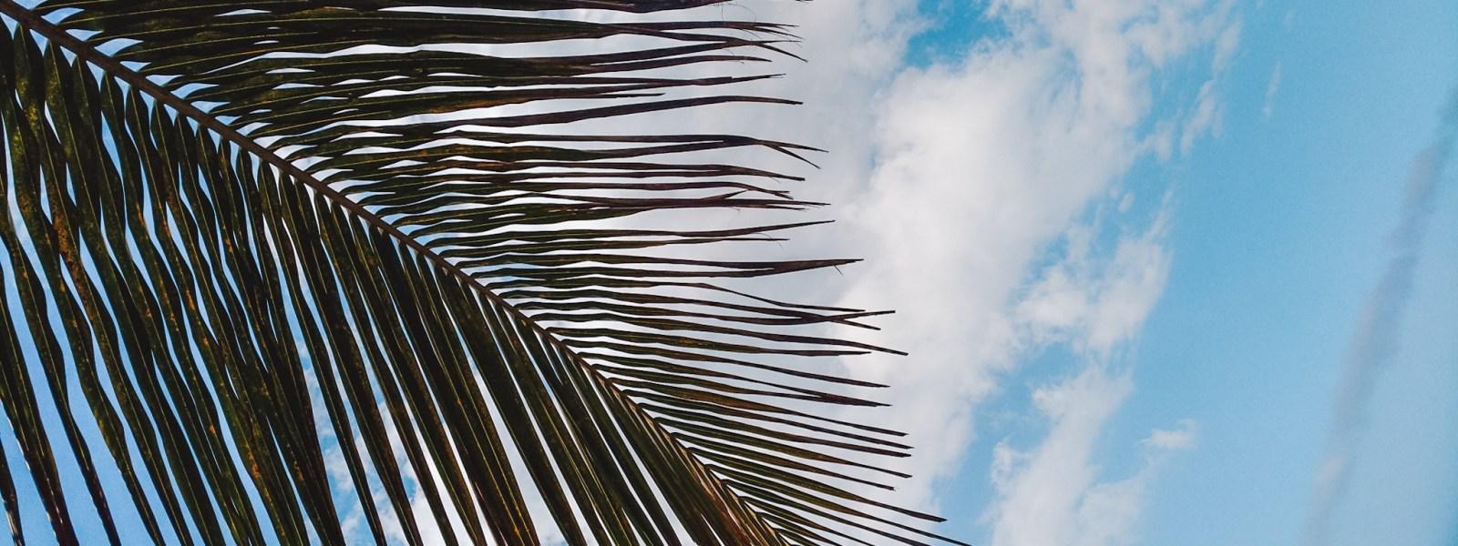 Palomino in Colombia: bezoek het Caribische strand