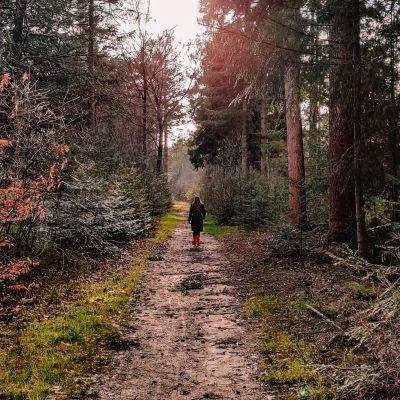 Reizen in tijden van Corona | Veluwe | The Orange Backpack