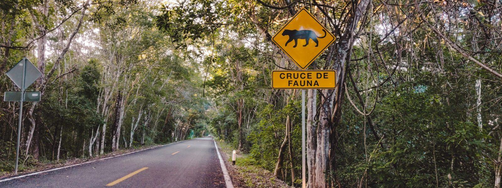6 unieke plekken in Mexico waar je alleen met een huurauto komt