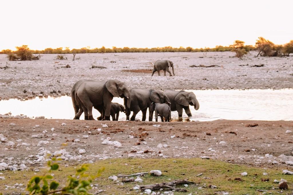 Safari in Etosha | Rondreis in Namibië | The Orange Backpack