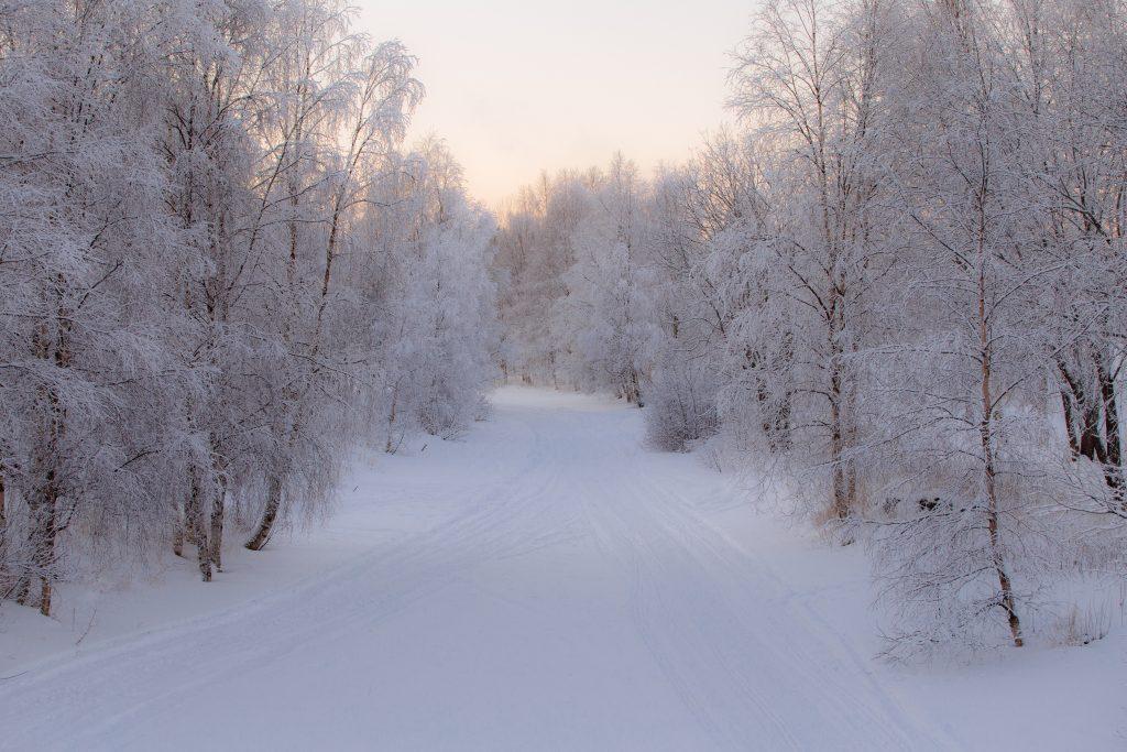 Besneeuwd Lapland Finland Europa