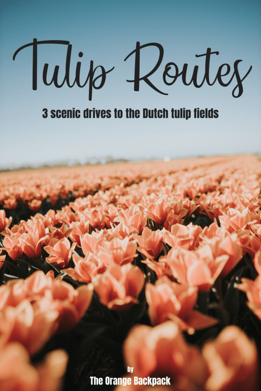 Tulip Route Netherlands | Tulip Fields Amsterdam