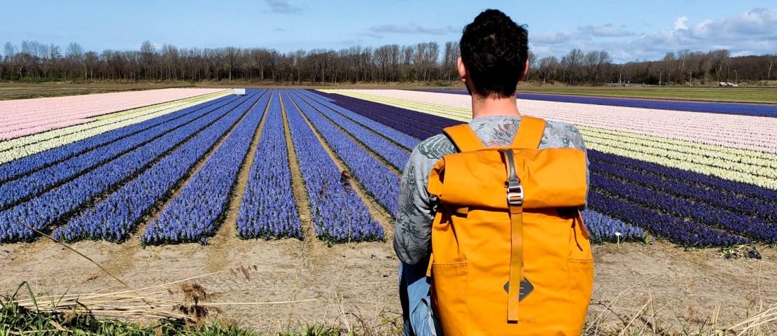 Bollenroute in Zuid-Holland: autoroute langs de tulpen- en bollenvelden bij Lisse