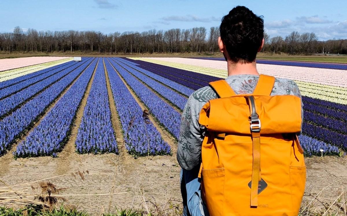 Bollenroute Zuid-Holland