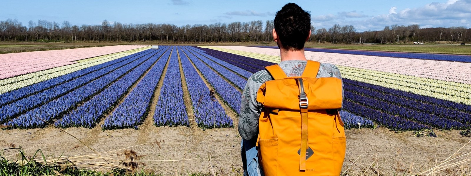 Amsterdam tulip route: the tulip fields in the Netherlands by car