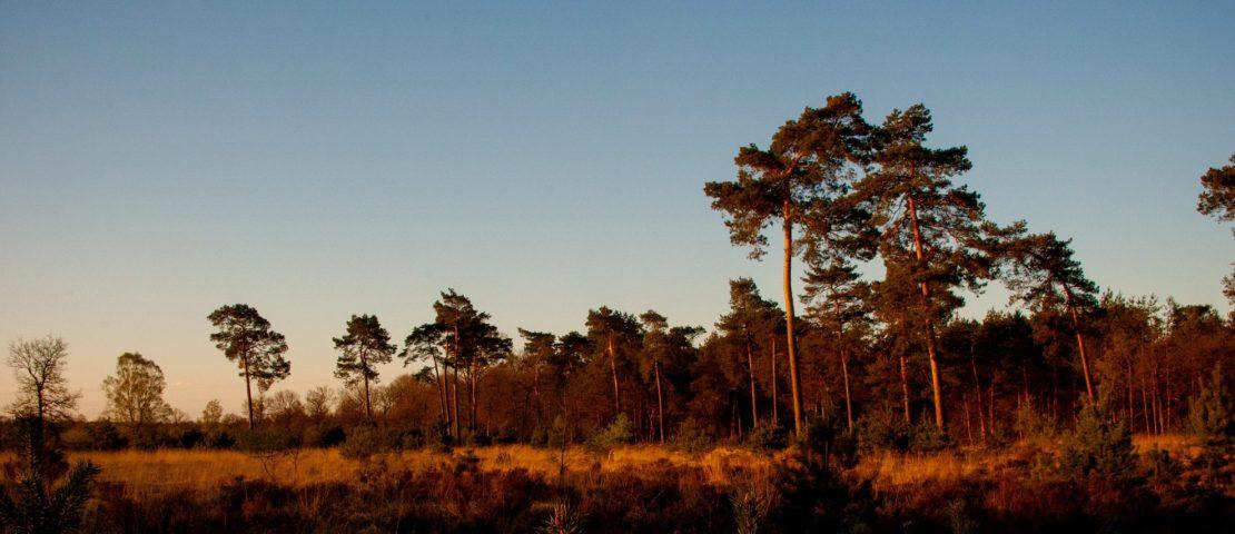 Autoroutes Drenthe: 5 roadtrips langs hunebedden en nationaal parken
