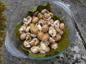 Vine leaves and mushrooms