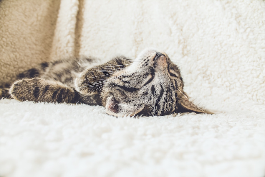 10 Most Dangerous Household Toxins for Pets 3   The Organic Beauty Blog