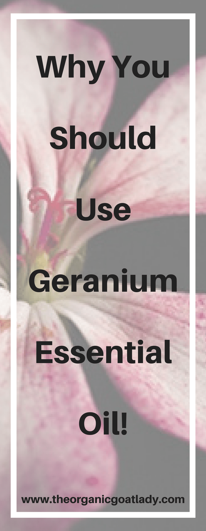 Why You Should Use Geranium Essential Oil!