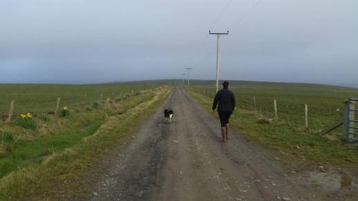 Core paths dog walking K Armet