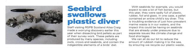 seabirds and plastic diver