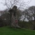 Tree stump 2 B Bell