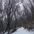 Binscarth Wood Path B Bell