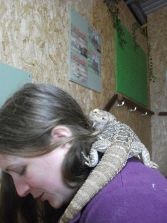 Fernvalley B Bell Lisa with lizard